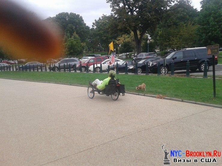 Женщина, гуляет, собаки, парк, Капитолий, Вашингтон, NYC-Brooklyn